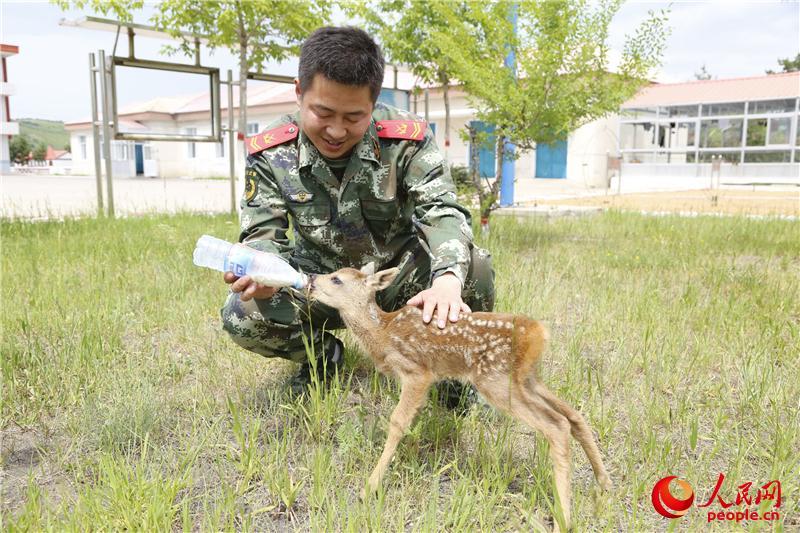 国家二级保护动物狍子