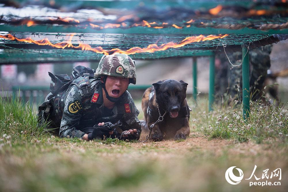 警犬與訓導員進行人犬協同通過障礙訓練。