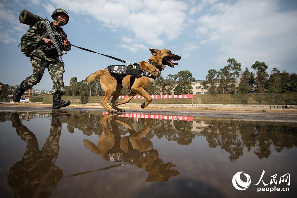 警犬與訓導員一起進行3公里武裝奔襲。