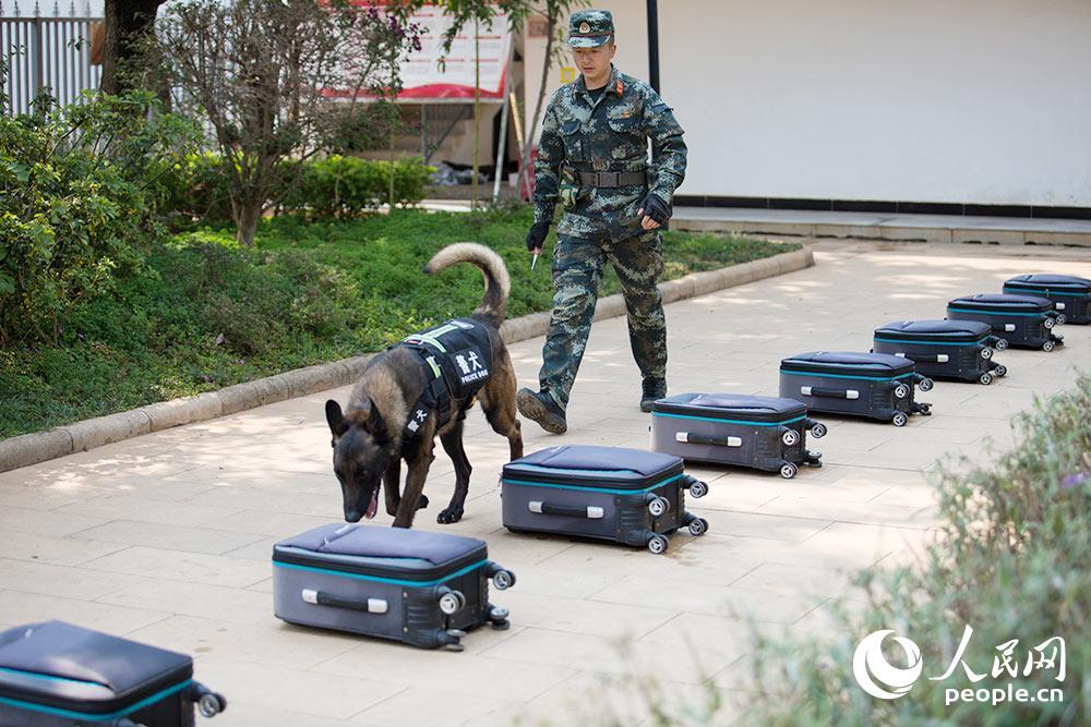 警犬進行密碼箱搜爆訓練。