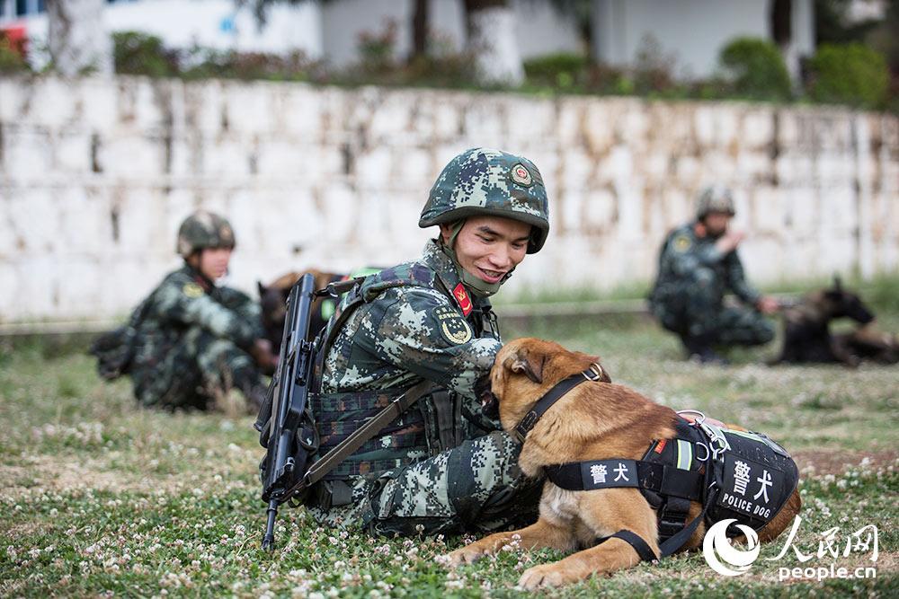 訓導員在訓練后為警犬按摩。