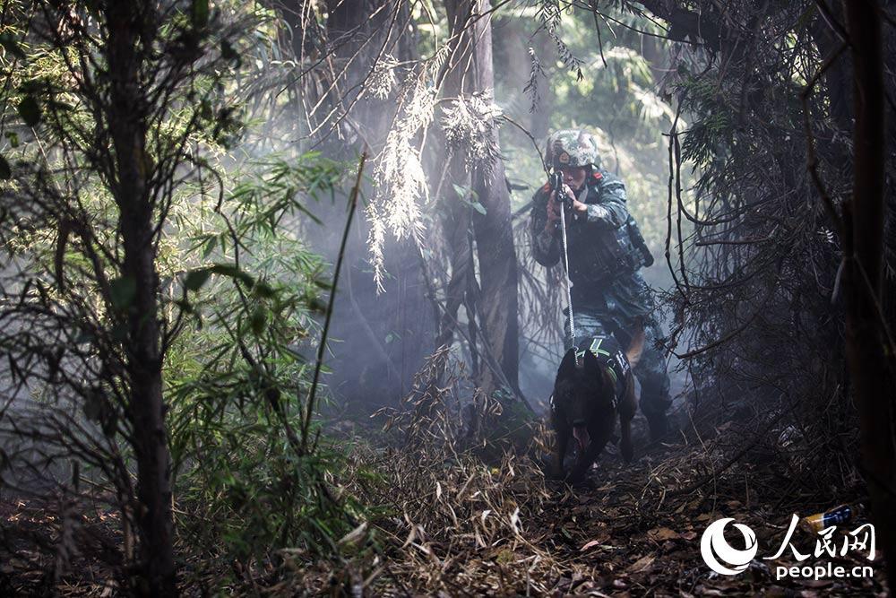 警犬與訓導員進行叢林搜捕訓練。