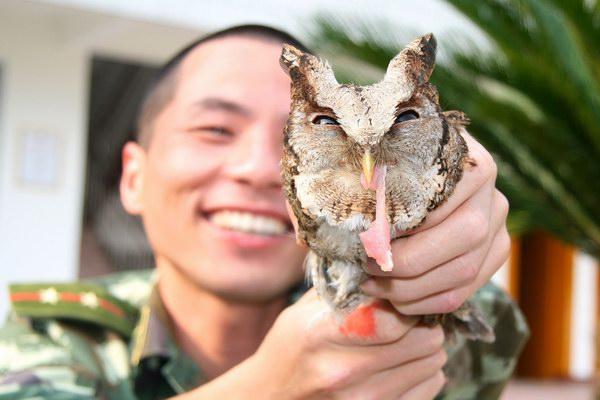 家二级保护动物猫头鹰
