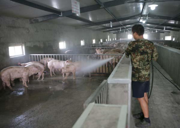 养殖猪场的设计图